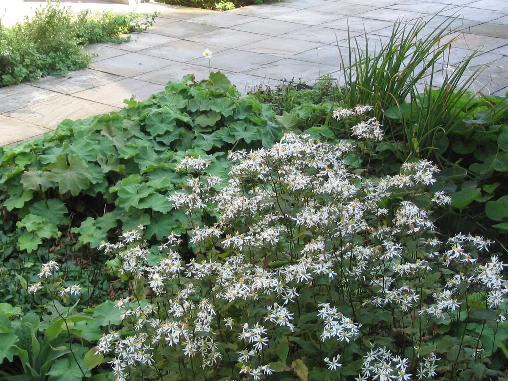Verhardingen en beplanting pesticidenvrij