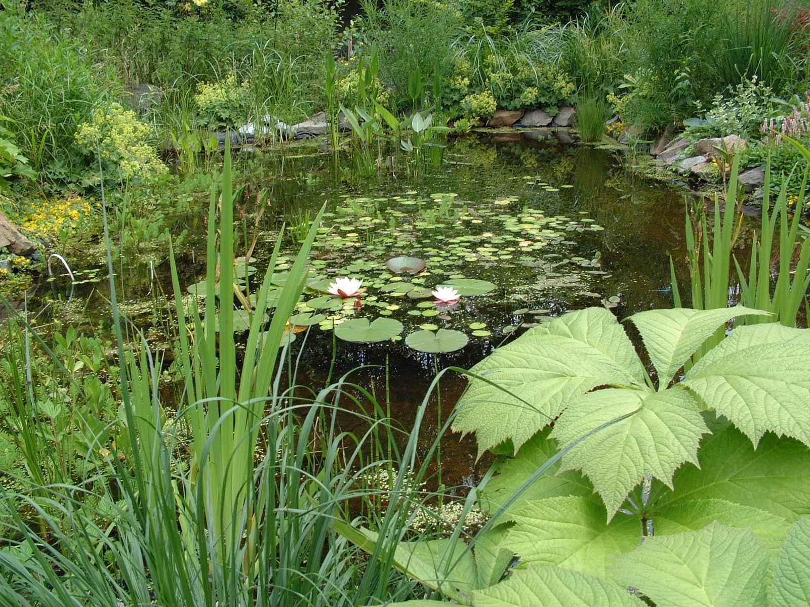 Wateropvang in de tuin
